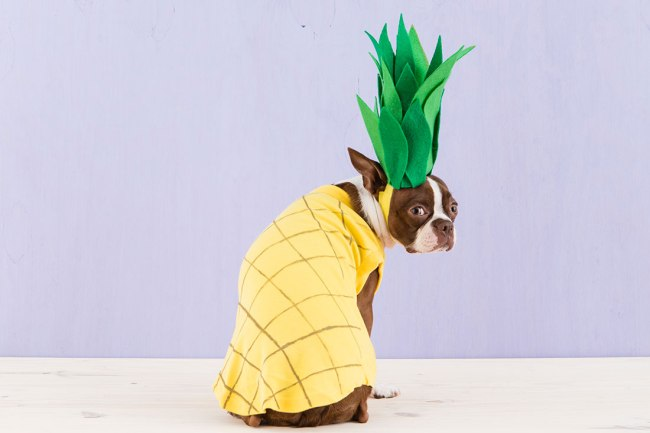 halloween_dogs_5costumes_082